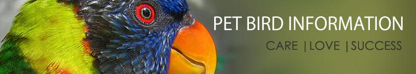 ParrotFeather com | Breeding Cockatiels (Part 1)
