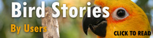 Bird-Stories