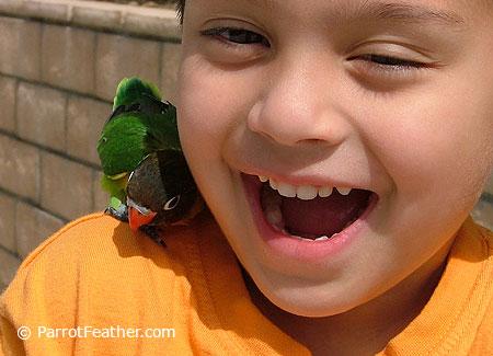 how to stop lovebird biting