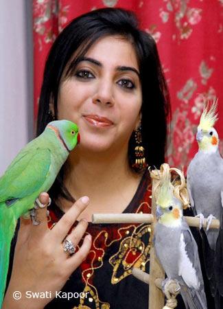 Swati-Kapoor-Indian-Ringneck-Cockatiel